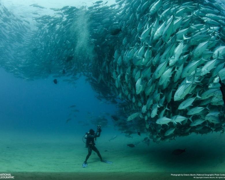 Les poissons souffrent aussi, arrêtons d'en manger !